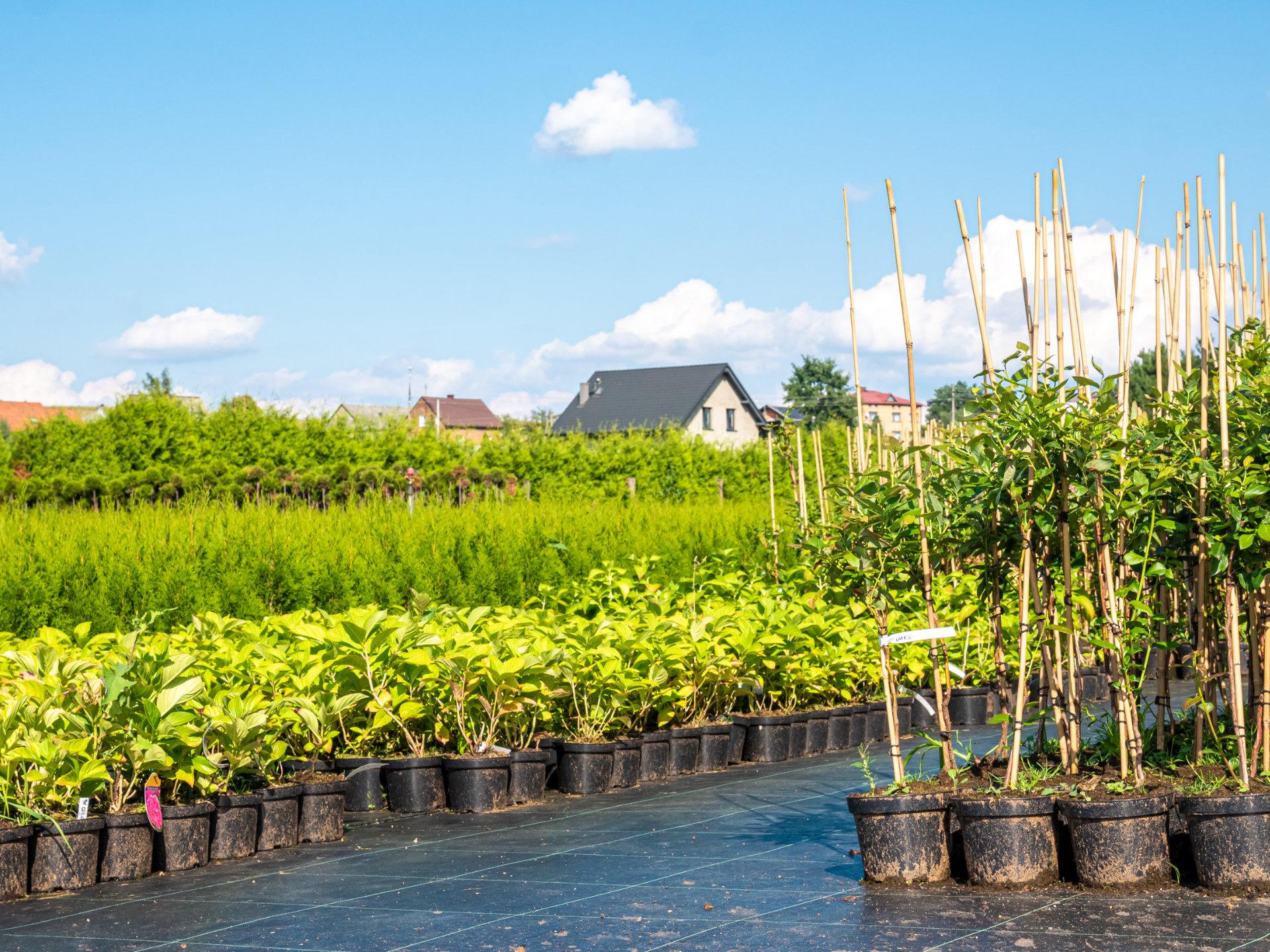 Packshoty roślin