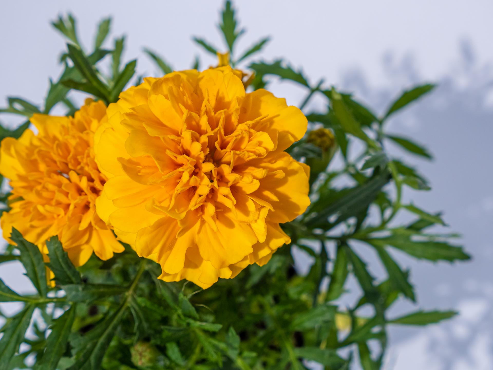 Ogrodnictwo Krauze – zdjęcia produktów